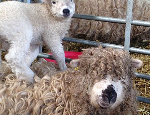 Lambing Guidance and related information